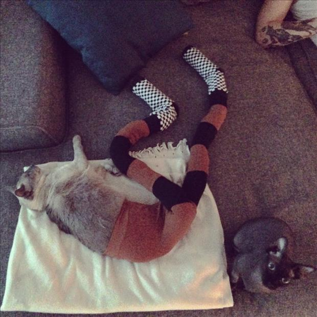 Cat's Wearing Tights 8