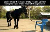 What A Chain can do