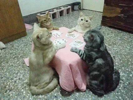 Image result for cats playing cards