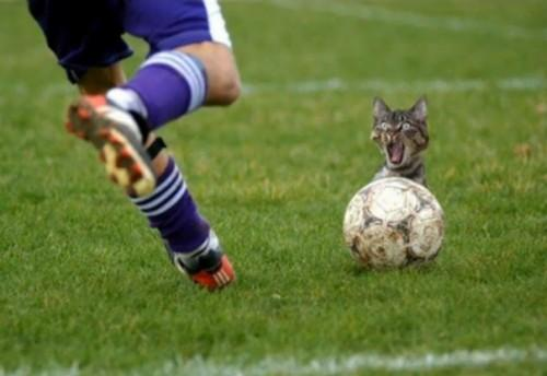 Football vs Catball