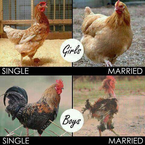 Single and Married