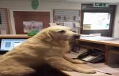 Dog at Office
