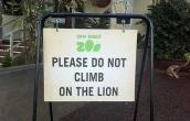 Dont Climb in lion
