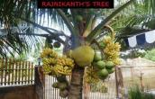 Rajnikanth Tree
