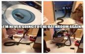 Snake When in pee