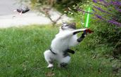 Star wars cat