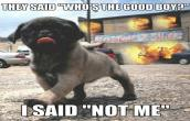 Who\\\'s the good boy?