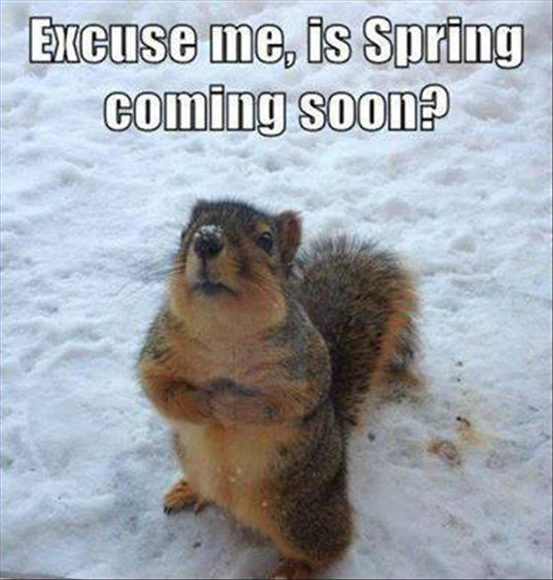 Is spring coming soon