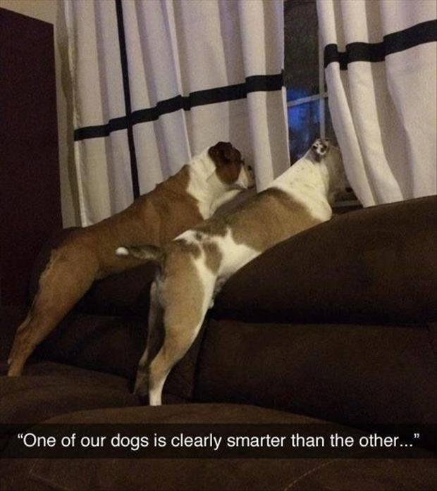 One dog is smarter than the other