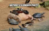 Natures slumber party