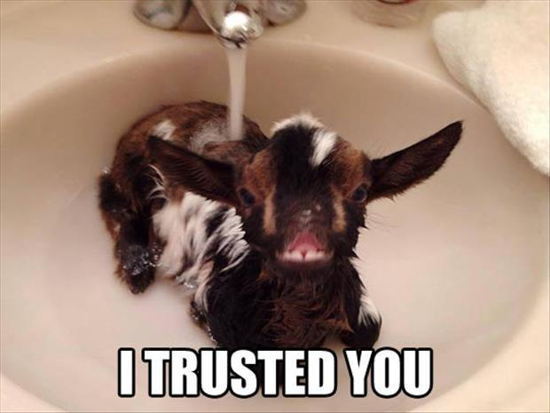 Trusted You